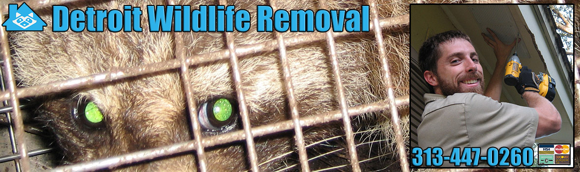 Detroit Wildlife and Animal Removal